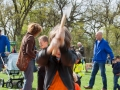 20150427-Koningsdag-Havelte-013